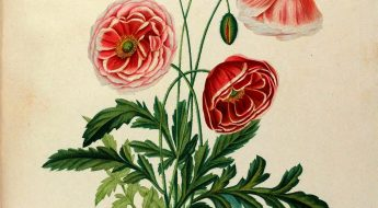 illustration of red flowers with green stems and leaves.