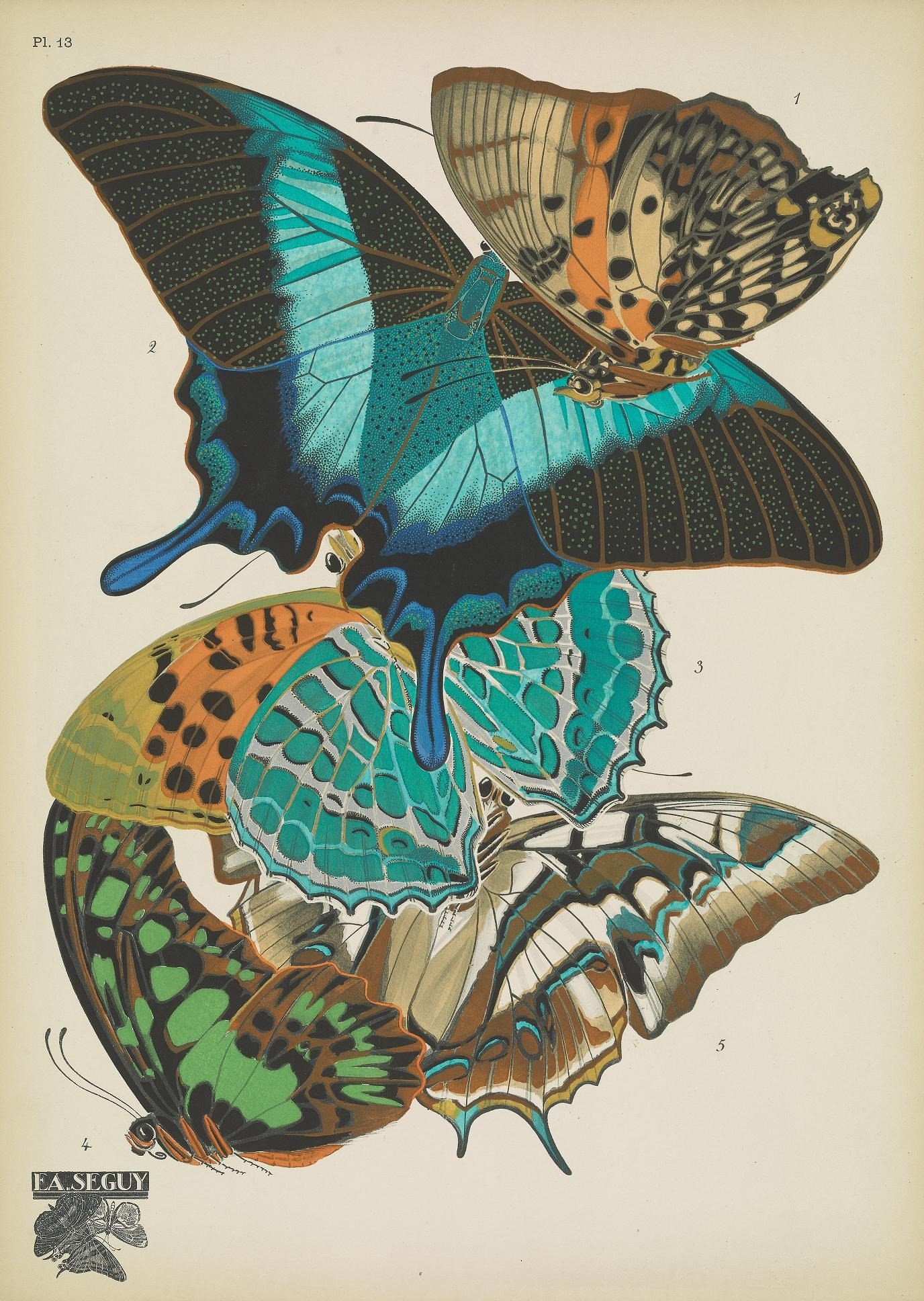 illustration of multiple butterflies positioned on top of one another.