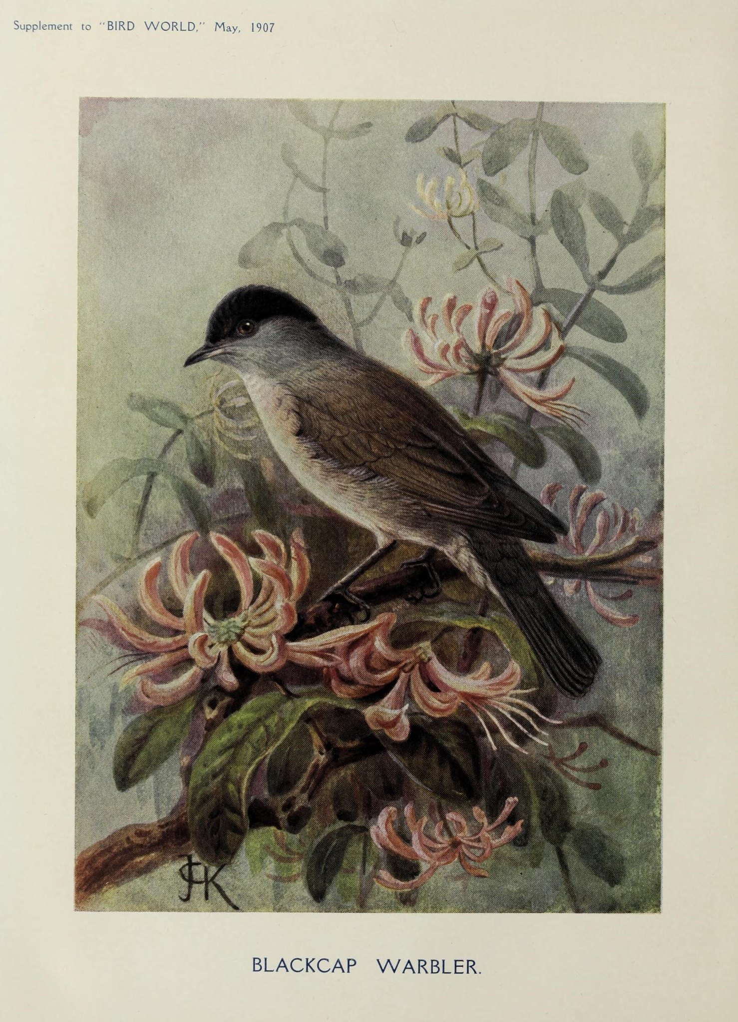 illustration of a bird sitting amongst pink flowers.