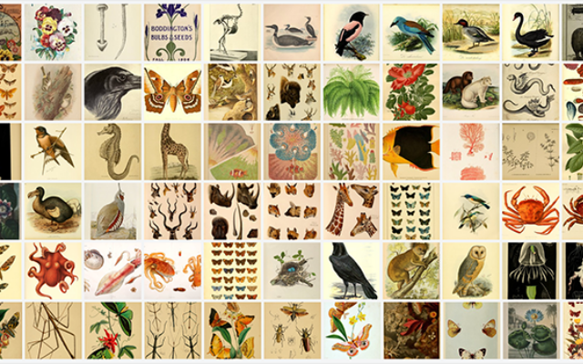 250,000+ Free Nature Images Now Available in Flickr!