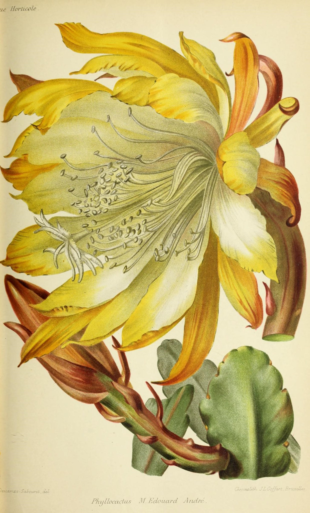 Illustration of a cactus with a yellow flower.
