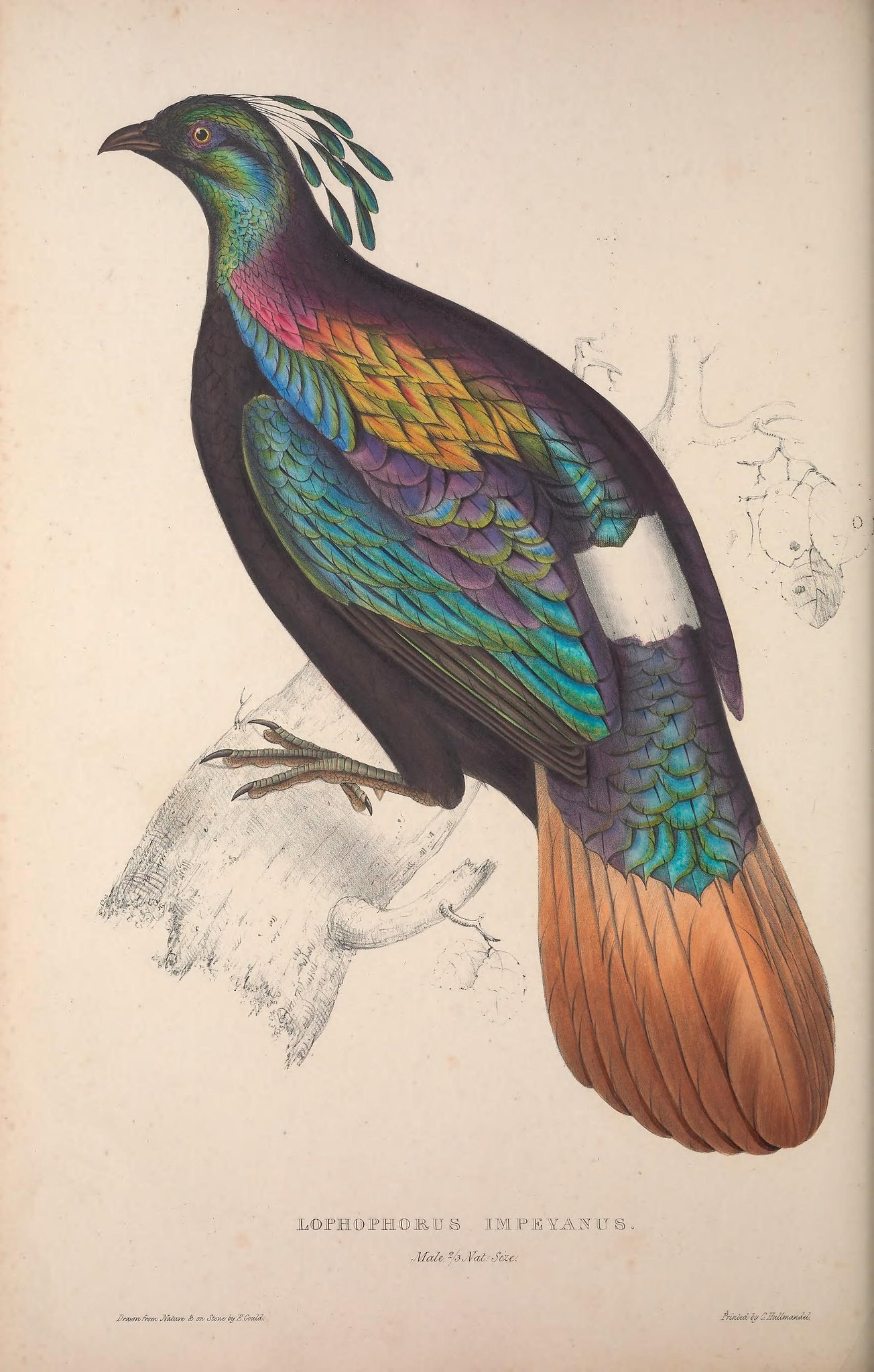 Illustration of a bird with colors including green, orange, black, pink, purple, and white.