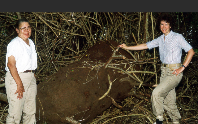 A Legend in Termite Field Biology