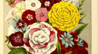 illustration of a colorful bouquet of flowers