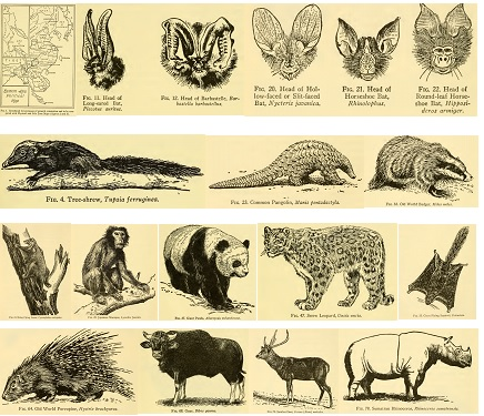 Map of Eastern Asia and pen sketches of some mammals.