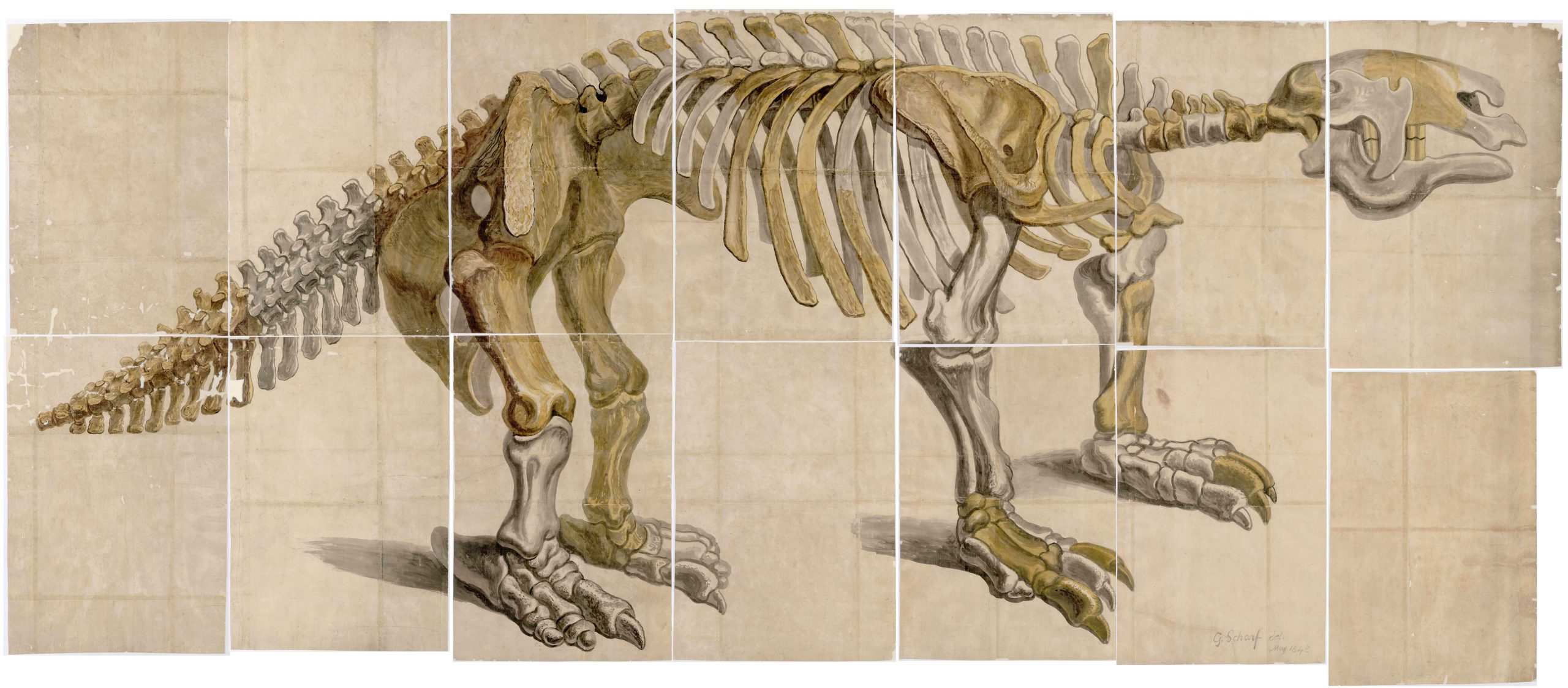 George Johann Scharf (1786-1860) Watercolour drawing of a Megatherium. N.p., 1842.