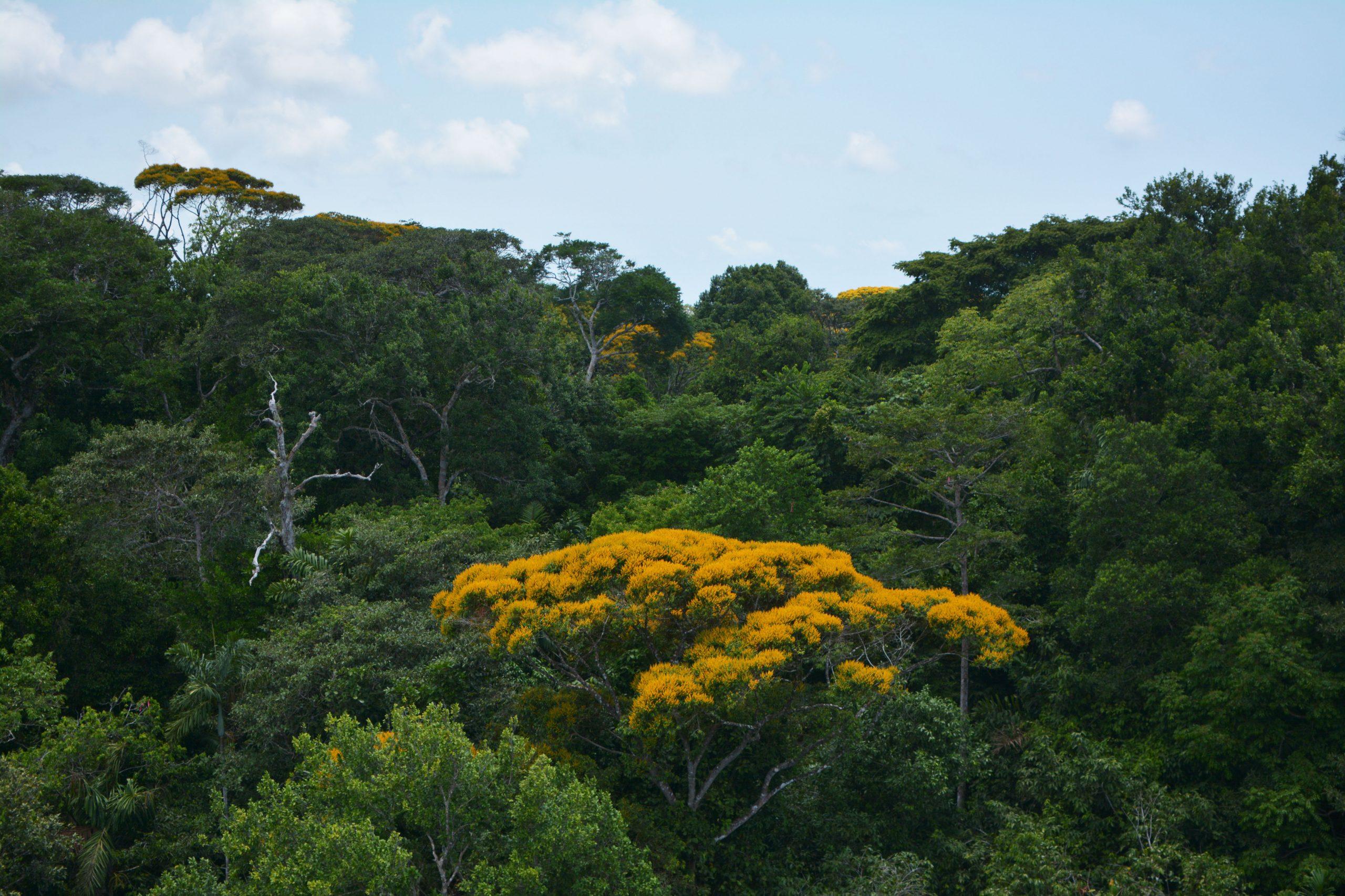 Photo of a lush tropical rainforest.