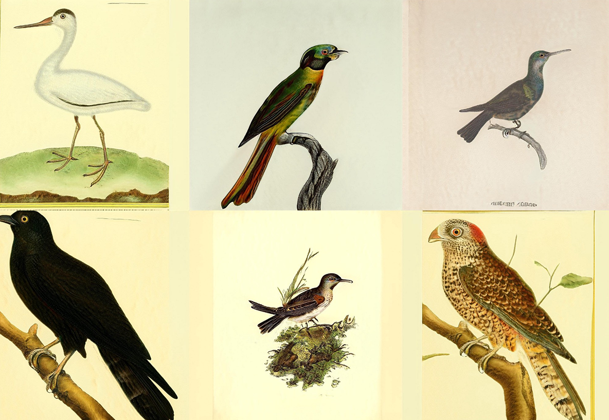 A set of six images on a grid. Each looks like a scientific illustration of a different bird.