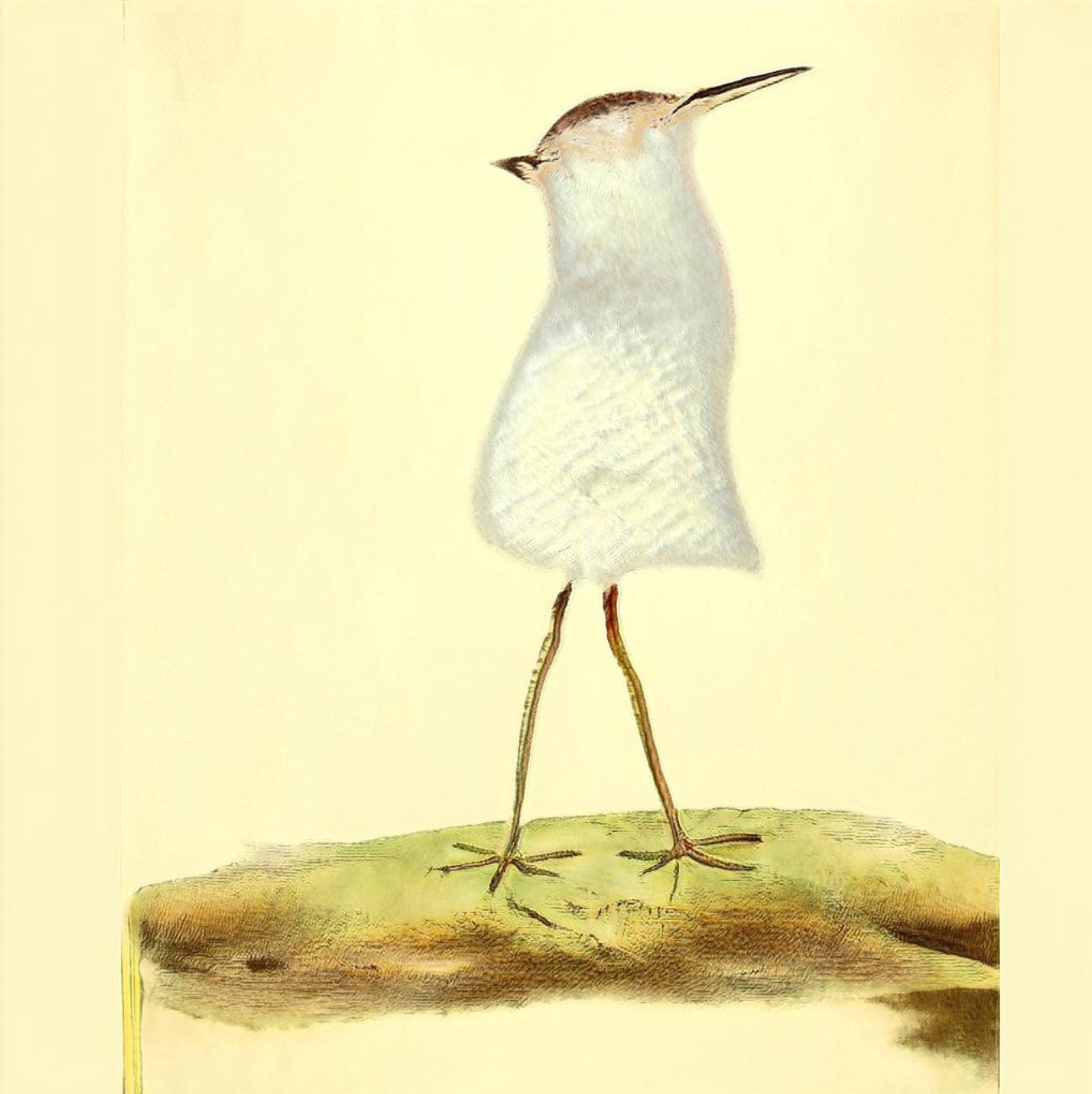 A single screenshot of a bird image in which the bird has two legs which look real but the body is tubular and upright unlike any bird I've seen. It also has no eyes and one beak on one side of its head and another beak on the other side.