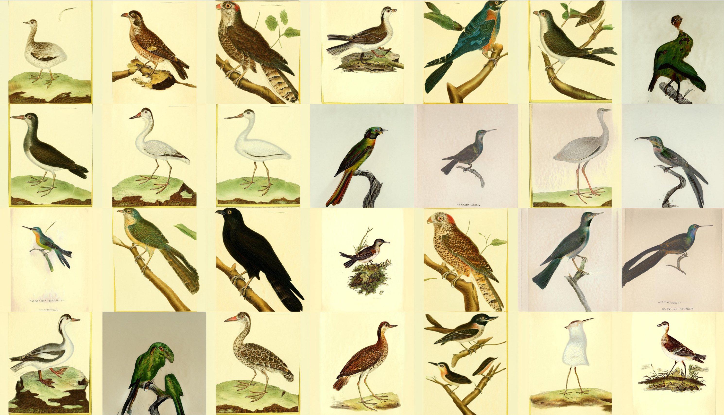 The contact sheet of images. Here if you don't look closely you think it's just a collection of real illustrations of birds. Most of them look like birds and we now have details like legs and eyes. In some cases a bird is a bit warped like it's melting, and in other cases a bird might have three legs or eyes. But for the most part it looks like real bird illustrations.