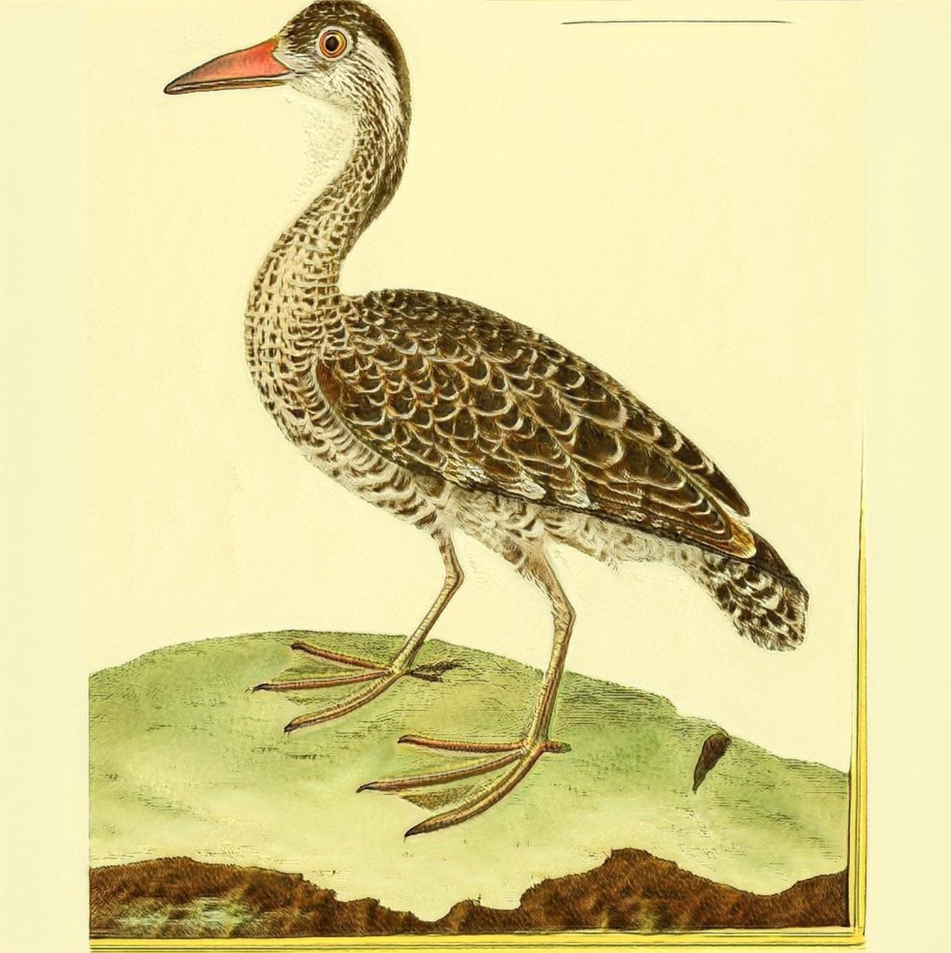 A single screenshot of an image produced by the StyleGAN. This looks like a real bird illustration. Its body is almost duck-like and it has two eyes and a beak and its feathers look like a real feather texture. It has two legs and it's standing on some grass. It does look very happy and alert though…