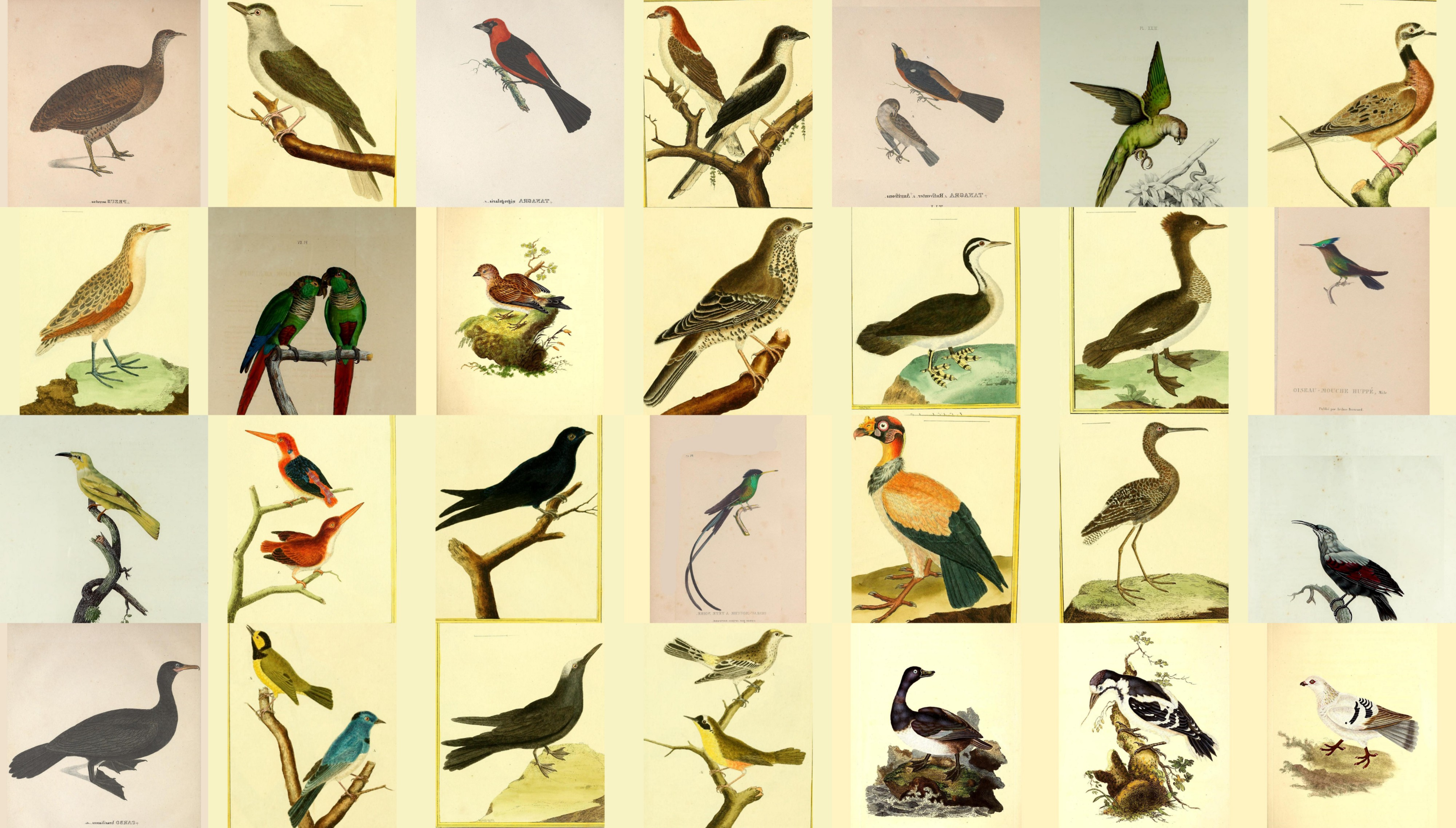 A contact sheet type layout with 28 real illustrations of different birds of different shapes, colours and positions. Some perching on branches, some on grass.