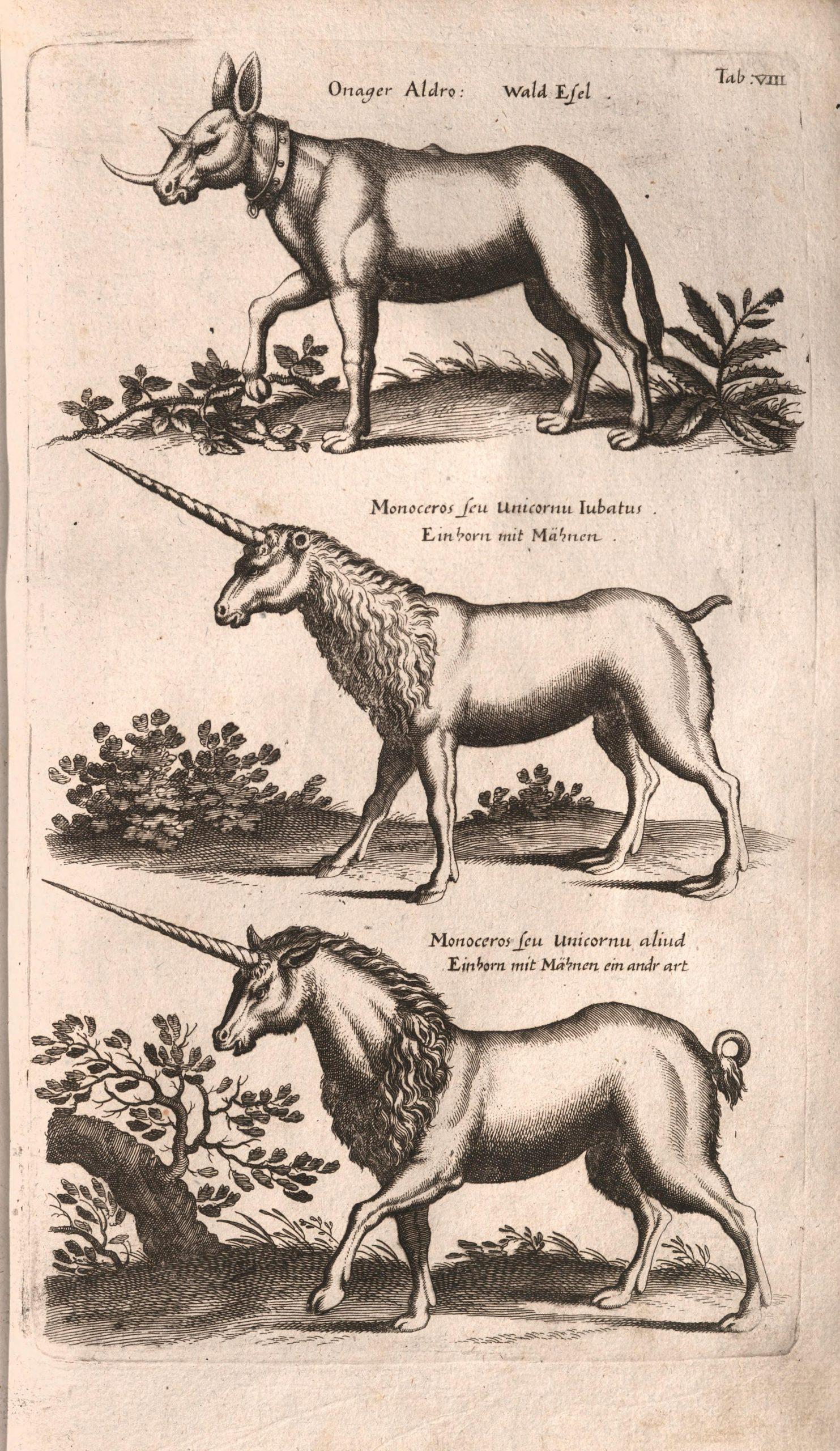 Engraved illustration of three unicorns.