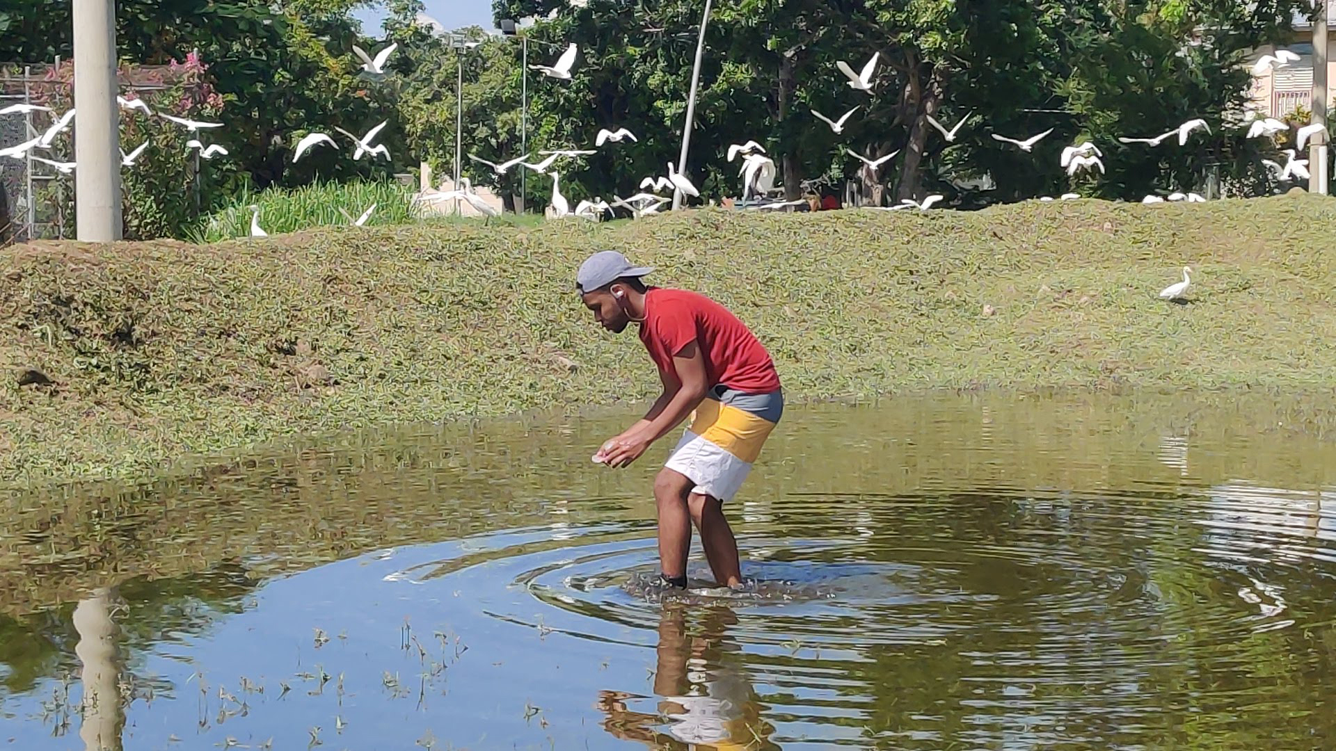 Black man in a red shirt and white, gray, and yellow shorts standing in a pond with birds flying in the background.