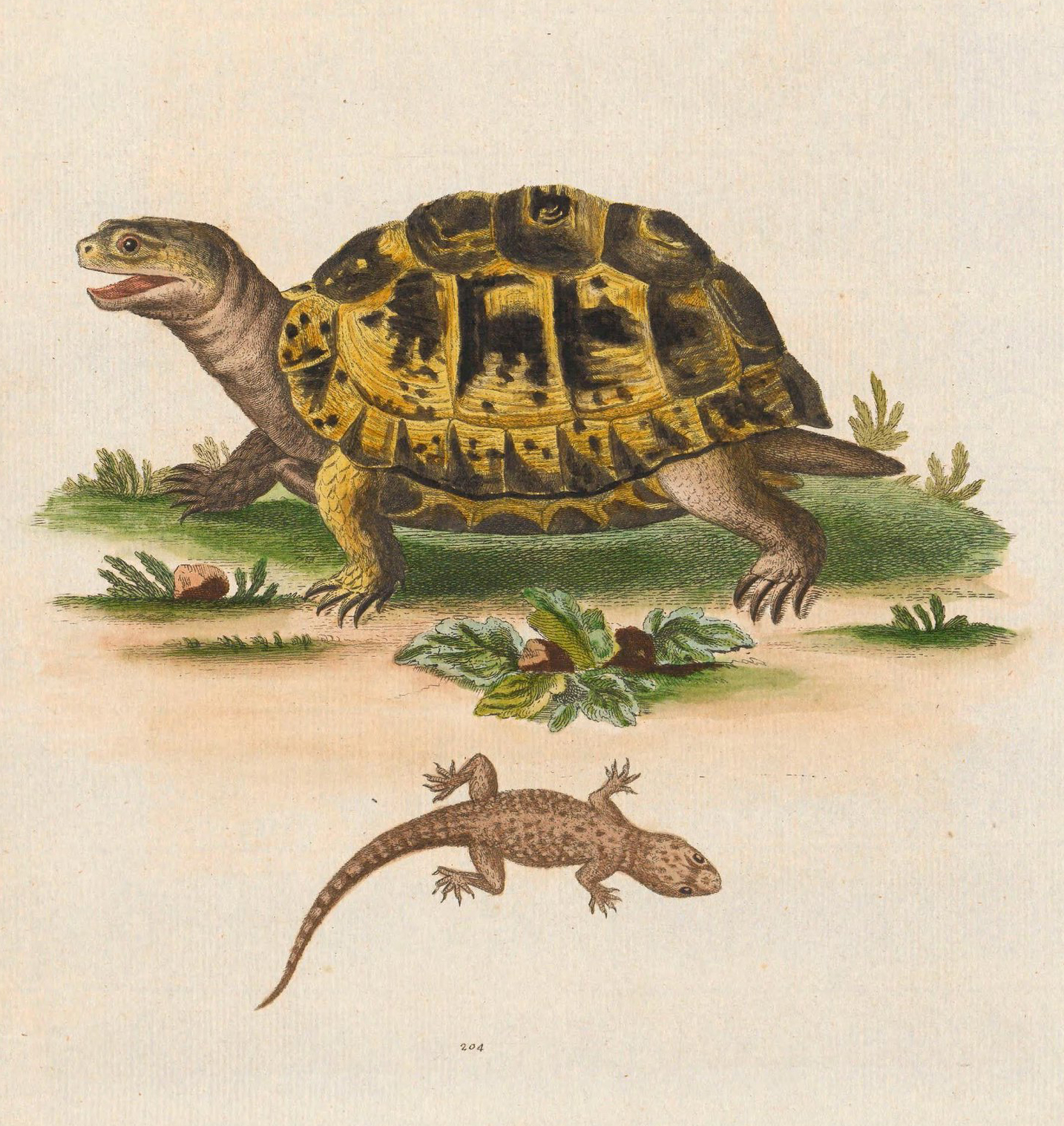 A turtle with a brown and yellow shell, illustrated above a brown lizard
